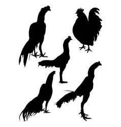 roosters gesture silhouette 06 vector image