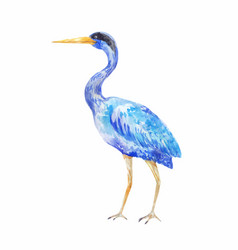 Watercolor blue heron of a standing bird vector