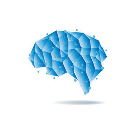 human brain anatomy structure vector image