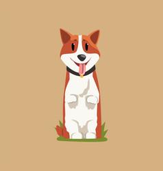 joyful red-haired corgi standing on hind legs vector image vector image