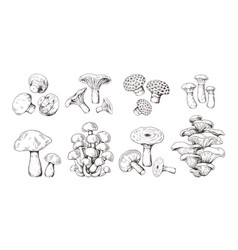 hand drawn mushrooms vintage sketch shiitake vector image