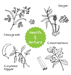 Handdrawn Set - Health and Nature vector image