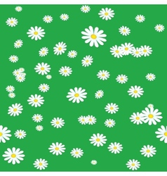 Seamless daisies background vector image vector image