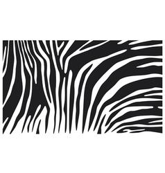 zebra skin background vector image vector image
