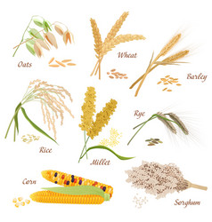 Cereal Plants icons Oats vector image
