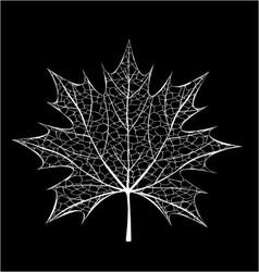 White leaf vector image