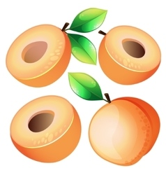 Composition of Apricot on white background vector