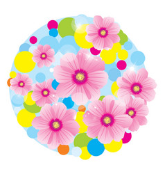 pink flowers cosmos circle vector image