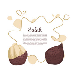 Salak salacca palm tree exotic juicy fruit vector