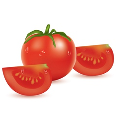 tomato and slices vector image