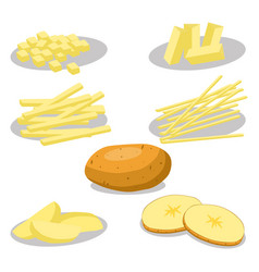 Whole vegetable potato vector