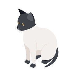 Ragdoll cat icon isometric 3d style vector image