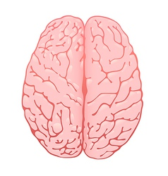 pink brain a top view vector image vector image