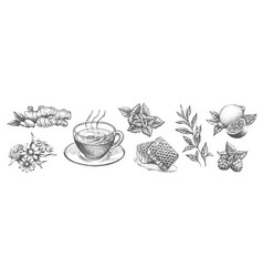 a collection tea items on white background vector image