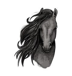 Black mare horse head sketch vector