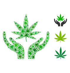 cannabis care hands mosaic of cannabis vector image