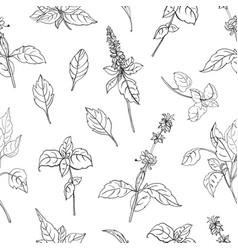 natural seamless pattern with basil leaves and vector image