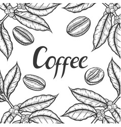 organic leaf bean vector image