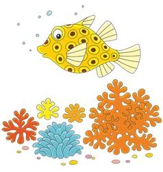 Yellow boxfish vector