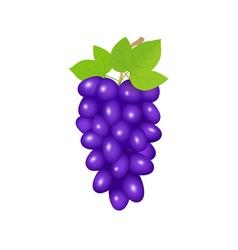 black grapes vector image vector image
