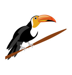 isolated cute toucan vector image