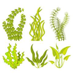 underwater seaweed elements vector image