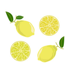 lemon leaves branch set in cartoon style vector image
