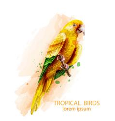 tropic parrot yellow bird watercolor vector image