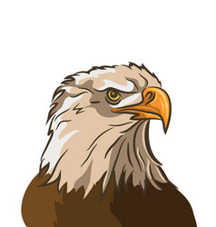 eagle isolated on white background vector image vector image