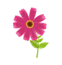 drawing pink cosmos flower spring icon vector image