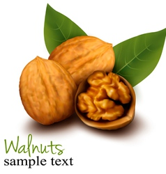Walnuts and a cracked walnut vector image vector image