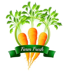 Fresh carrots with a farm fresh label vector