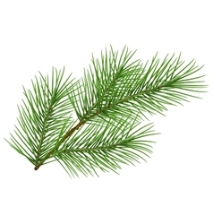 Green fluffy pine branch symbol of new year vector