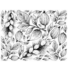 hand drawn of gardenia erubescens and barringtonia vector image
