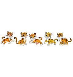 Set five cute cartoon tiger cubs vector