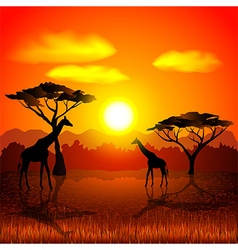 Sunset in african savannah background vector image