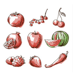 Assortment of red foods fruit and vegtables vector