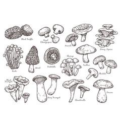 forest mushrooms sketch vintage plants engraving vector image