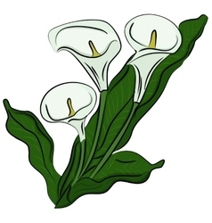 Hand drawn of a calla vector image