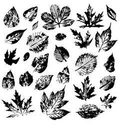 set of autumn leaves on a white background vector image