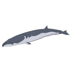 finback whale icon isolated on white background vector image