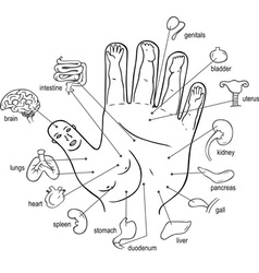 Acupuncture points on palm vector image vector image