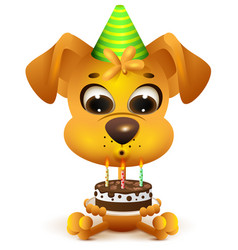 birthday yellow dog holding cake vector image