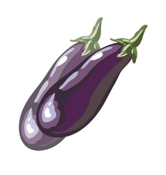 Fresh eggplant or aubergine vegetable in cartoon vector