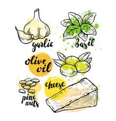 italian ingredients for pesto vector image