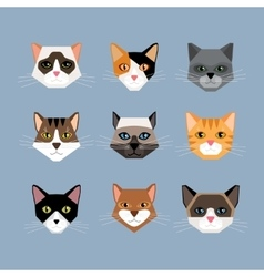 Cats heads in flat style vector