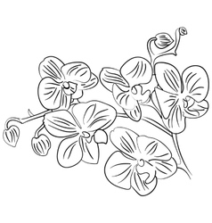 flowers with bud outline sketch vector image