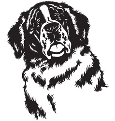 Head of saint bernard black white vector