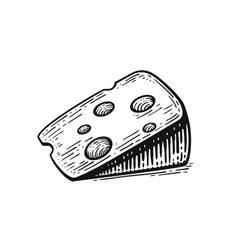 sketch piece of cheese vector image
