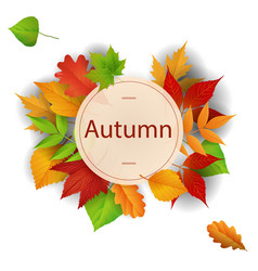 autumn circle maple leaf frame background i vector image